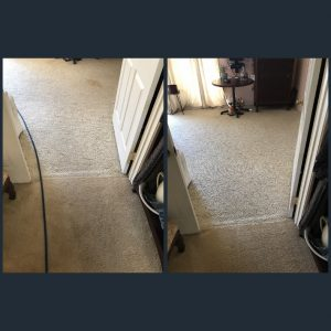 carpet cleaning pet stains in newport beach