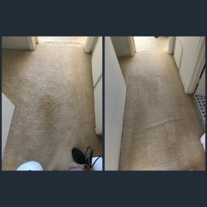 carpet cleaning pet stains in newport beach california