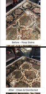 removing pet stains from a wool rug